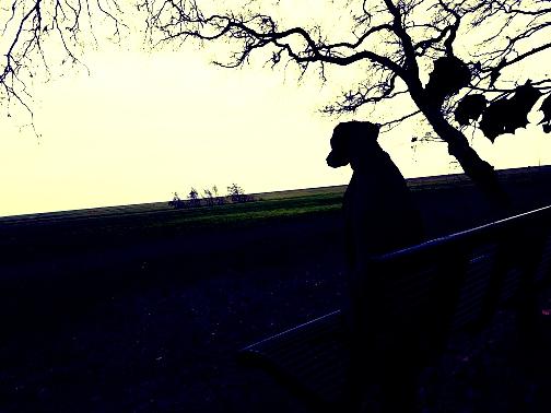 bankje rysterbosk uitzicht op gaasterland