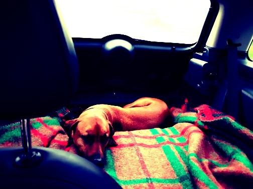 rysterbosk slapen in de auto (2)