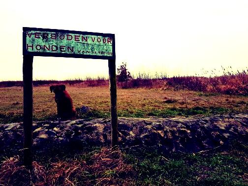 verboden voor honden mirns